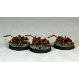 Giant Soldier Ants (2)