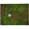 4ft x 6ft, Forest Theme Cloth Game Mat